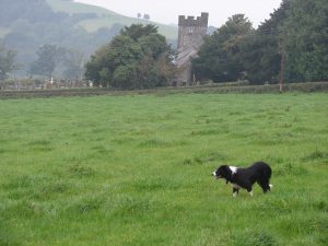 Abbie practicing in Meirion Owen's field, with the Llangathen church in the background. Photo by John.